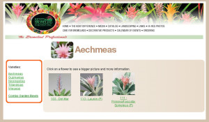 Kent's Bromeliad web design and programming (design collaborated with Fred Lamb Design).